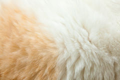 Close up fur of a ginger cat Royalty Free Stock Photos