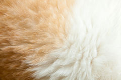 Close up fur of a ginger cat Royalty Free Stock Photo