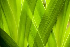 Close-up, Garden, Green Royalty Free Stock Photos