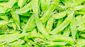 Close-up garden peas Royalty Free Stock Image