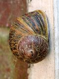 Close up of a garden snail stock photography