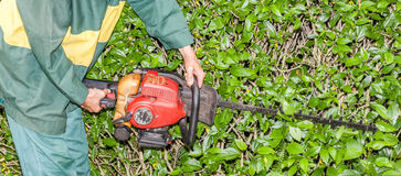Close up Gardener use hedge trimmer machine for gardening. Royalty Free Stock Images