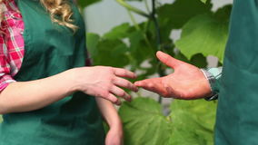 Close up on gardeners shaking hands. Close up on gardeners in greenhouse shaking hands stock footage