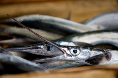 Close-up of garfish (belone belone). Close-up of garfish in the fish market - Greece Royalty Free Stock Photography