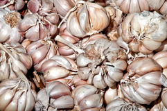 Close up of garlic Royalty Free Stock Photography