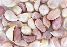 Close up the garlic background texture Royalty Free Stock Photography
