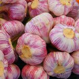 Close up of garlic bulbs stock photos