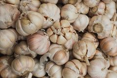 Close up  Garlic bunch in the market royalty free stock photos