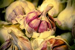 Close up of a garlic head. Numerous garlics in the market. The teeth and the cape of the garlic are observed. stock photos