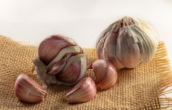 close-up of garlic on jute cloth and white background stock images