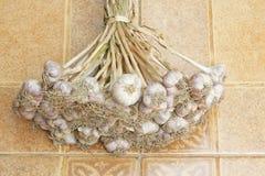 Garlic plant groups royalty free stock image