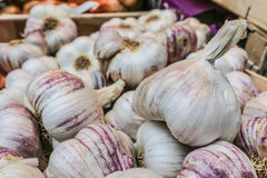 Close up of garlic. For sale at the farmers market Stock Photo