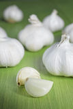 Close up garlic Royalty Free Stock Photo