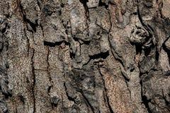 Close-up gebarsten huid van boomstam van de achtergrond van de boomtextuur stock foto's