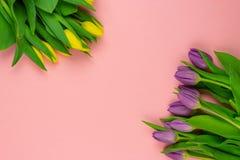 Close-up gele en purpere die tulpen op roze achtergrond worden ge?soleerd stock afbeelding