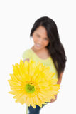 Close-up of a Gerbera holding by a young woman Stock Image