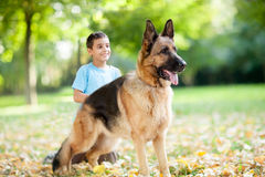 Close up of German Shepherd Dog in the park,boy in background. Smiling child with a German Shepherd Dog in the park Stock Photos