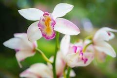 Close-up geschotene tak van roze bevlekte orchideeën op groene bokehaard royalty-vrije stock afbeelding