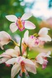 Close-up geschotene tak van roze bevlekte orchideeën op groene bokehaard stock foto's