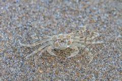 Close up Ghost Crab Stock Photos