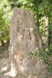 Giant termite mound. Close up giant termite mound Royalty Free Stock Photo