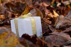 Clouse up gift box in the forest with natural tree leaves stock photo