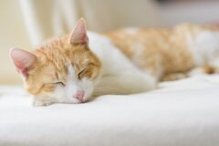 Close-up of Ginger Cat Lying on Floor Royalty Free Stock Image