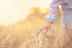 Close up girl's hand on grass flower field. scenery scene,feeling freedom Royalty Free Stock Photography
