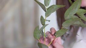 Close-up: girl florist holding a branch of eucalyptus