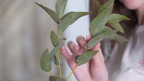 Close-up: girl florist holding a branch of eucalyptus royalty free stock image