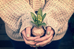 Close-up on girl hands holding a jacinth pot in winter Stock Photos