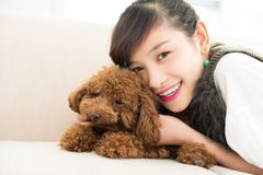 Honey puppy Stock Images