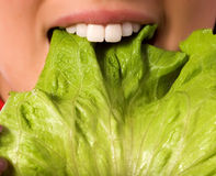 Close Up Girl Is Eating A Salad Leaf Stock Image