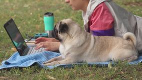 Close up girl laying and typing on laptop on a lawn with her pug around stock video
