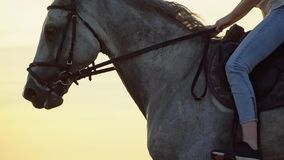 Close-up of girl legs riding on a horse on the field during sunset, slow motion stock video