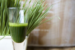 Close up glass of wheatgrass. Close up shot glass of wheatgrass juice with wheatgrass background Royalty Free Stock Photo