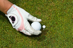 Close-up of a gloved hand of a woman golfer placing golf ball on Royalty Free Stock Images