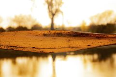 Golden leaf by river stock photography