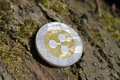 Close up of golden coin ripple on mossy bark background Stock Images
