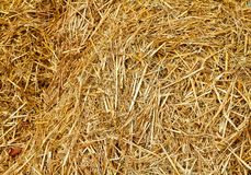 Close Up of golden hay showing straw stock image