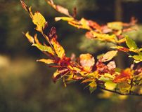 Close up of golden leaves shining royalty free stock photos