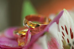 Close-up of golden rings on orchids Royalty Free Stock Photo