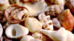 Close up golden wedding rings on shells. Macro stock video footage