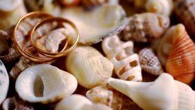Close up golden wedding rings on shells. Macro stock video