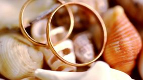 Close up golden wedding rings on shells. Macro stock footage