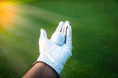Close up golf ball in golf glove hand with green grass royalty free stock photo
