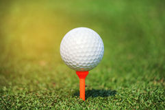 Close up golf ball on tee Stock Photography