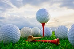 Golf ball on tee pegs ready to play and on green grass in the nature background royalty free stock photography