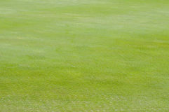Close up of Golf green Stock Photography