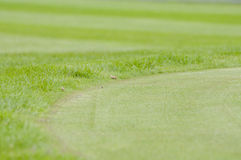 Close up of Golf green Royalty Free Stock Image